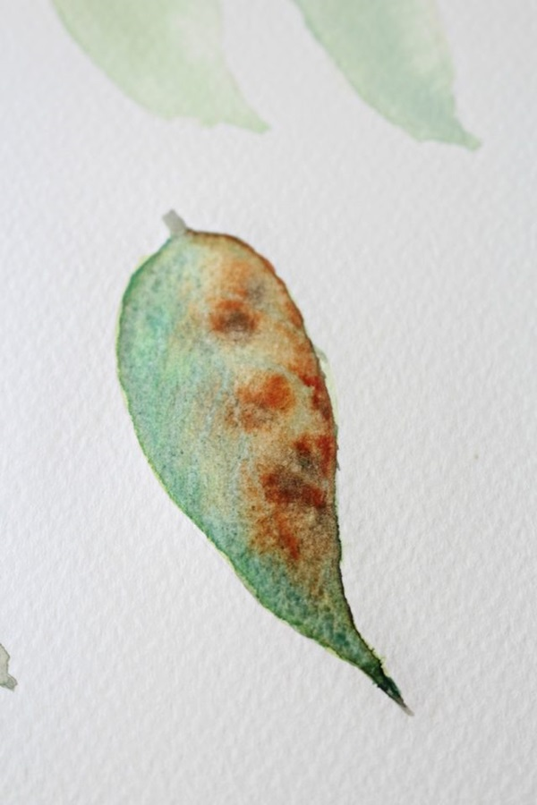 How to Paint a Basic Leaf with Water color 12