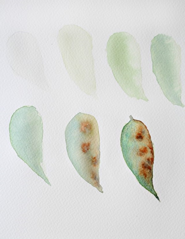 How to Paint a Basic Leaf with Water color 13