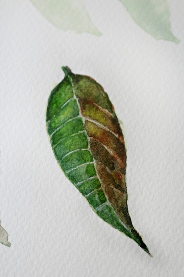 How to Paint a Basic Leaf with Water color 14