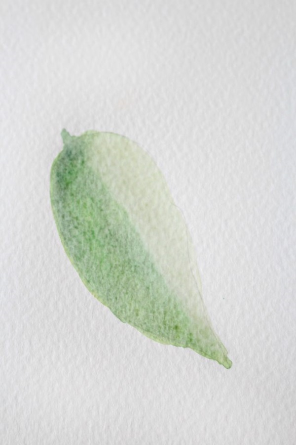 How to Paint a Basic Leaf with Water color 8