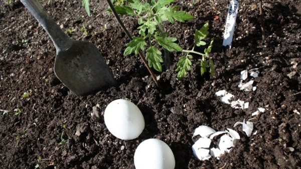 10 Things to do with Eggshells 2