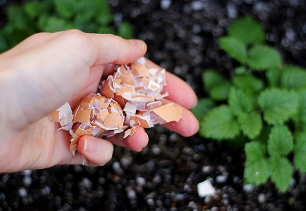 10 Things to do with Eggshells 7