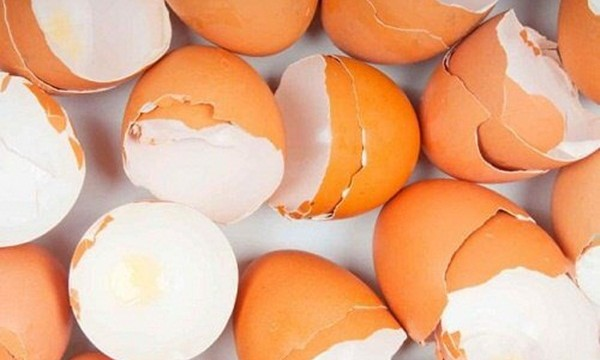 10 Things to do with Eggshells Feature Image