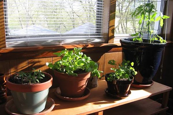 How to Grow essential Herbs and Spices for Kitchen Feature Image