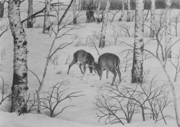 40 Incredible Pencil Drawings of Nature you have never seen before 11
