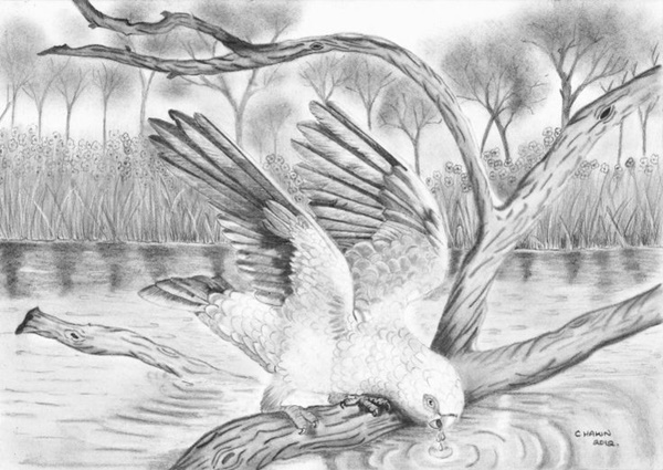 40 Incredible Pencil Drawings of Nature you have never seen before 16