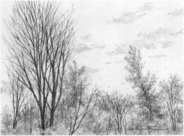 40 Incredible Pencil Drawings of Nature you have never seen before 19