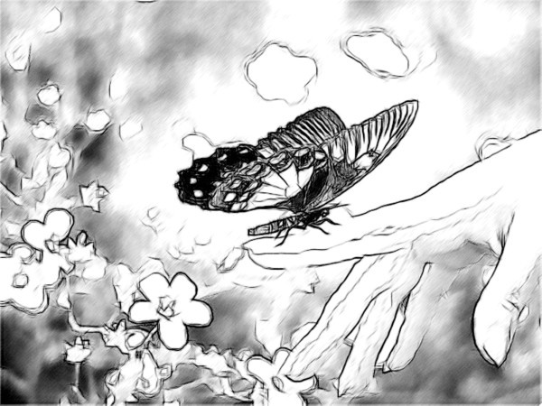 40 Incredible Pencil Drawings of Nature you have never seen before 21