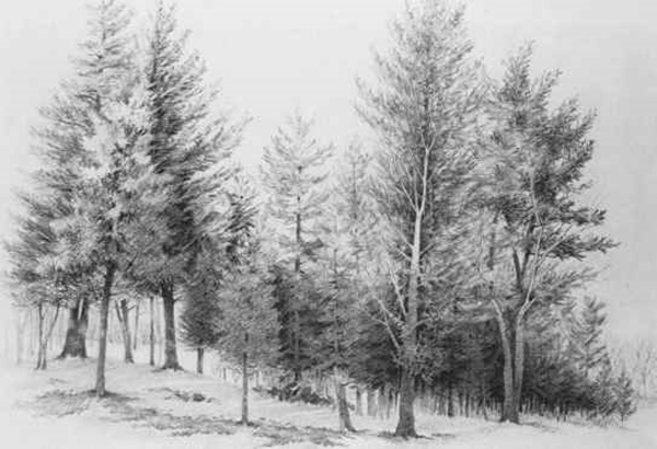 40 Incredible Pencil Drawings of Nature you have never seen before 22