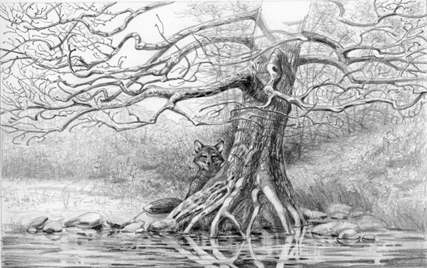 40 Incredible Pencil Drawings of Nature you have never seen before 36