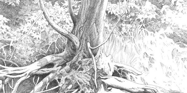 40 Incredible Pencil Drawings of Nature you have never seen before 4