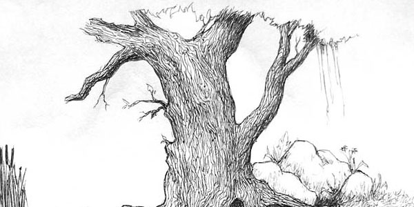 40 Incredible Pencil Drawings of Nature you have never seen before 6