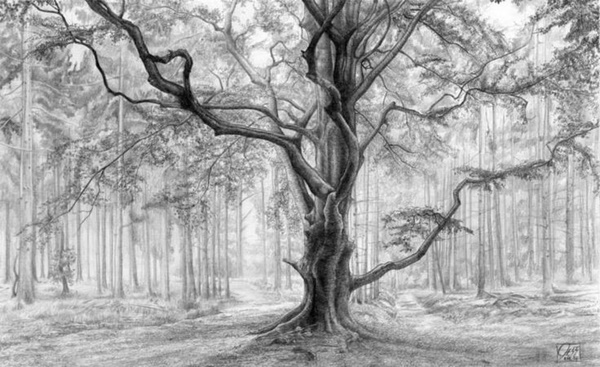 40 Incredible Pencil Drawings of Nature you have never seen before 7