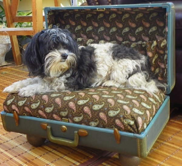 10 Ideas to Reuse Old Furnitures into Pet Beds 4