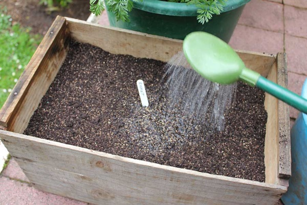 How to Grow a Plant from Seed 3