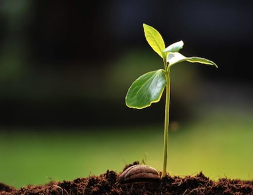 How to Grow a Plant from Seed Feature Image