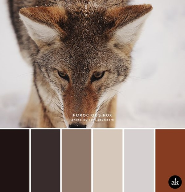 30-receiving-color-palettes-inspired-by-animals-1