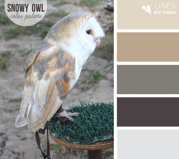 30-receiving-color-palettes-inspired-by-animals-10