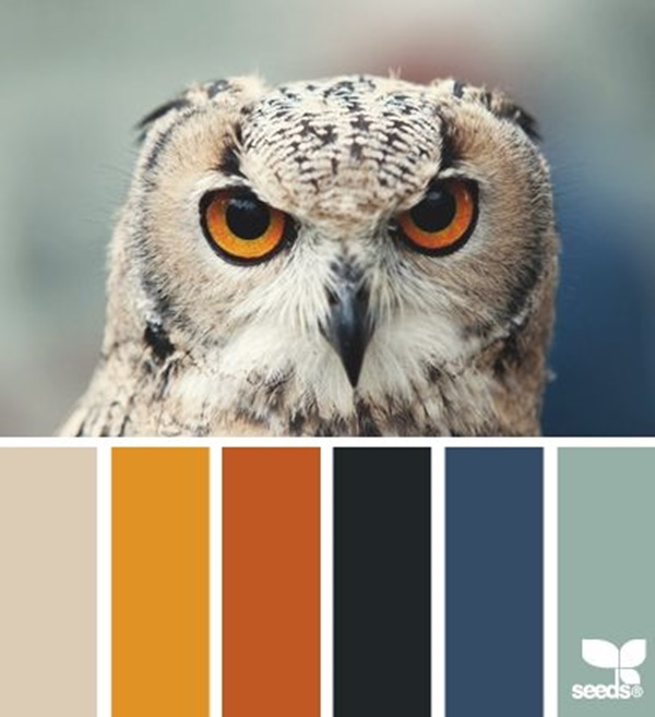 30-receiving-color-palettes-inspired-by-animals-11