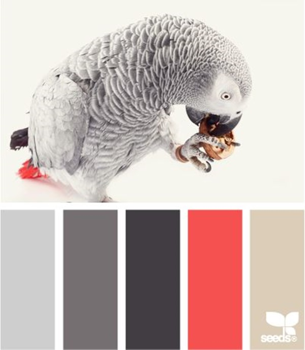 30-receiving-color-palettes-inspired-by-animals-12