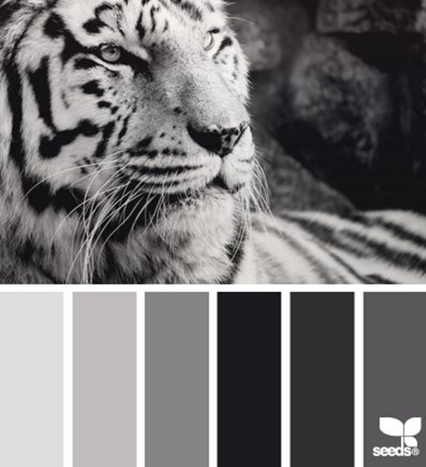 30-receiving-color-palettes-inspired-by-animals-14