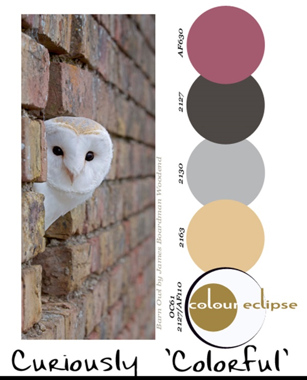 30-receiving-color-palettes-inspired-by-animals-15