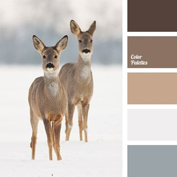 30-receiving-color-palettes-inspired-by-animals-16