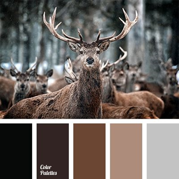 30-receiving-color-palettes-inspired-by-animals-18