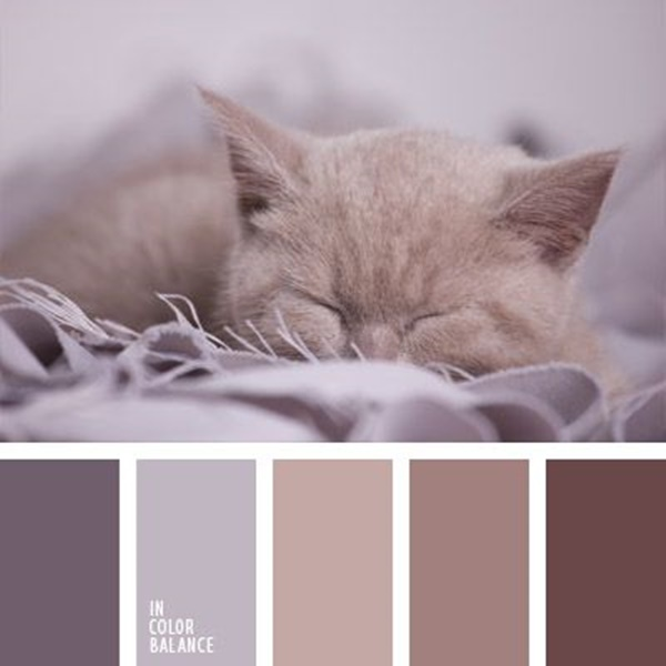 30-receiving-color-palettes-inspired-by-animals-19