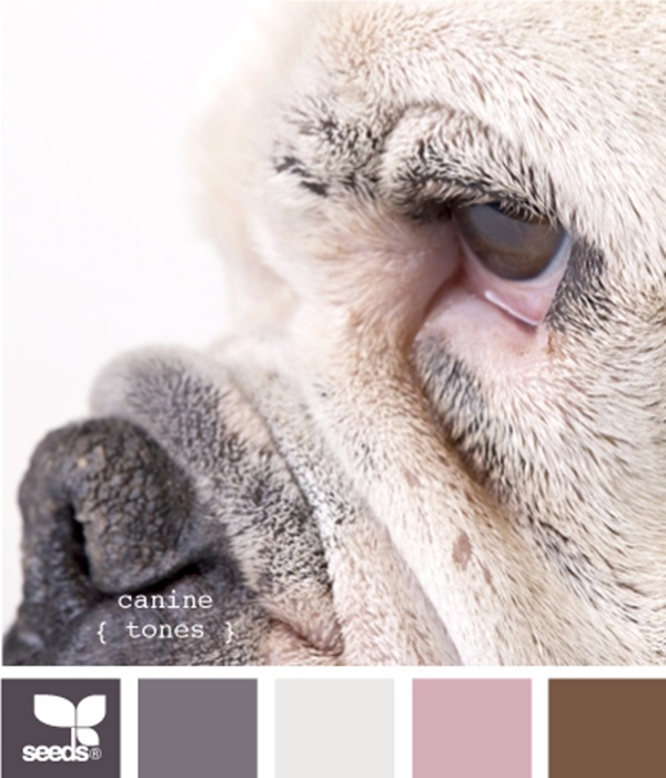 30-receiving-color-palettes-inspired-by-animals-2