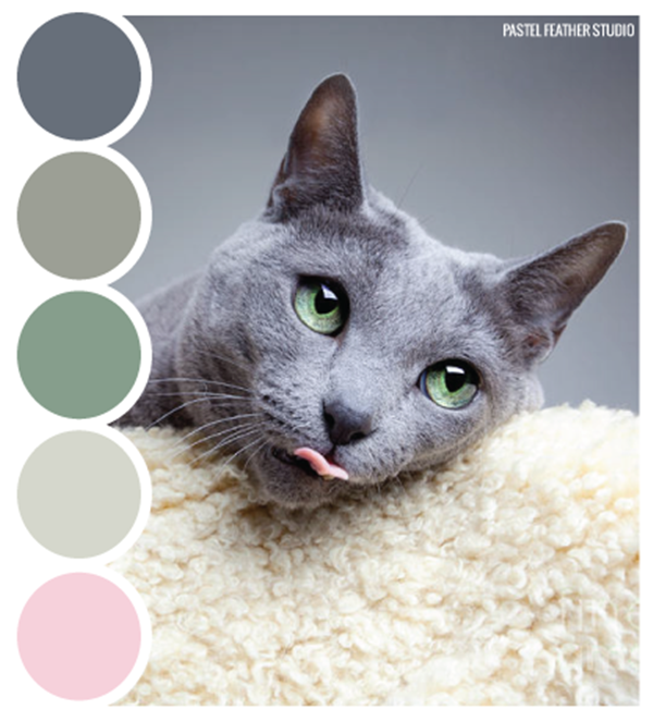30-receiving-color-palettes-inspired-by-animals-22