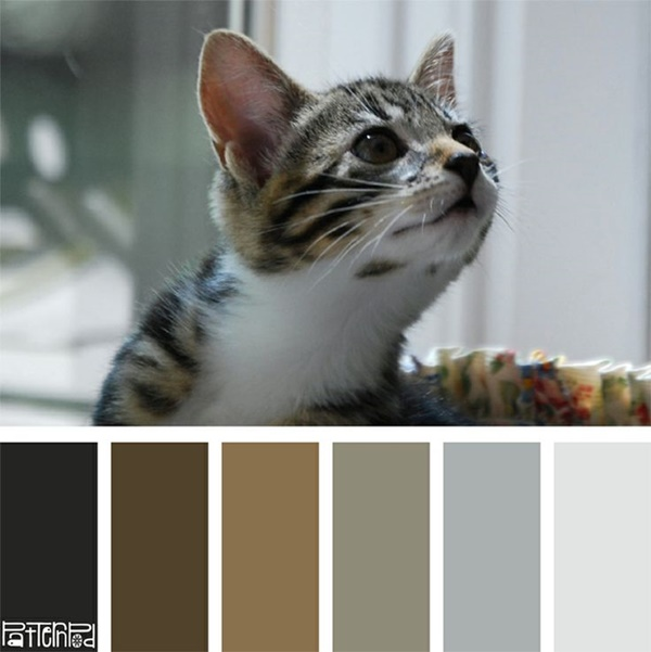 30-receiving-color-palettes-inspired-by-animals-24
