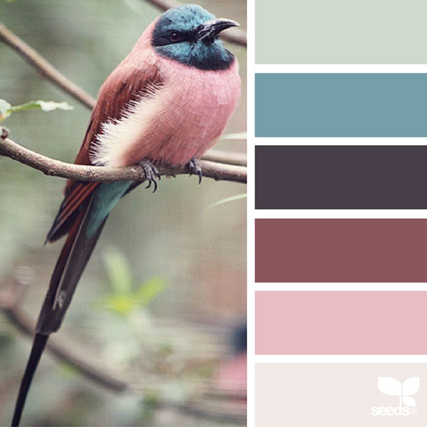 30-receiving-color-palettes-inspired-by-animals-25