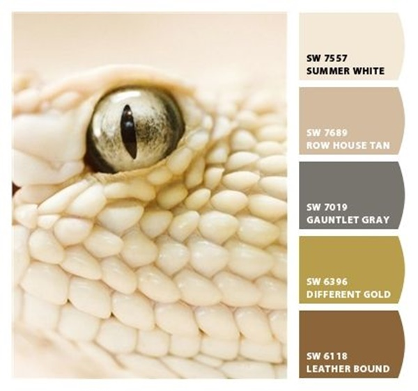 30-receiving-color-palettes-inspired-by-animals-26