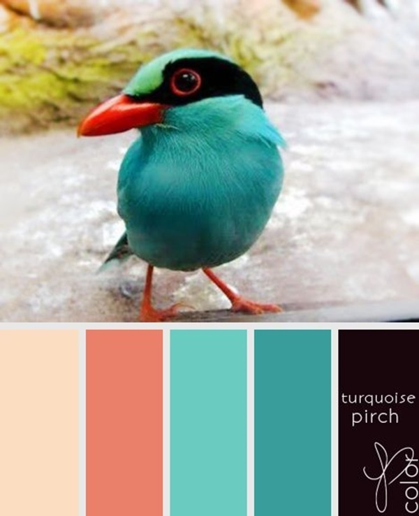 30-receiving-color-palettes-inspired-by-animals-28
