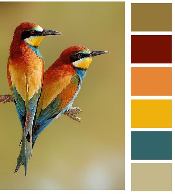 30-receiving-color-palettes-inspired-by-animals-29