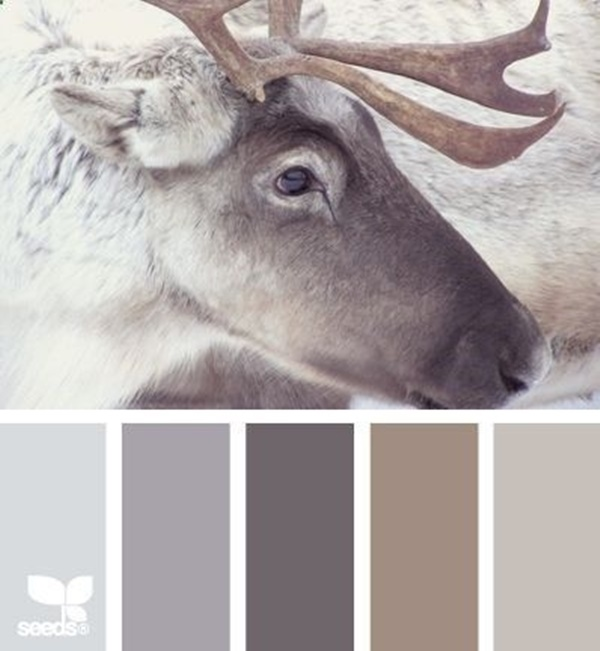30-receiving-color-palettes-inspired-by-animals-3