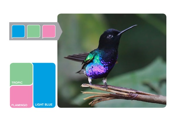 30-receiving-color-palettes-inspired-by-animals-30