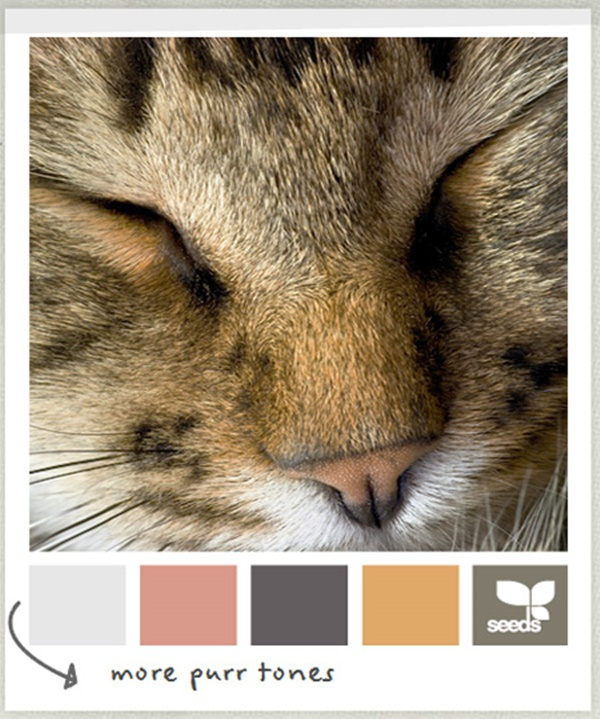 30-receiving-color-palettes-inspired-by-animals-4