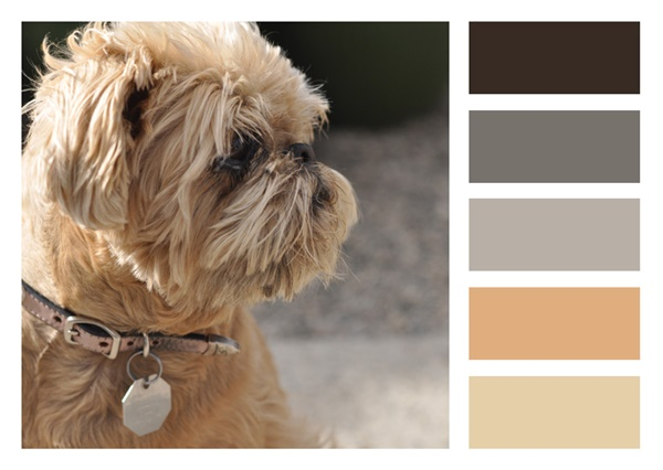 30-receiving-color-palettes-inspired-by-animals-5