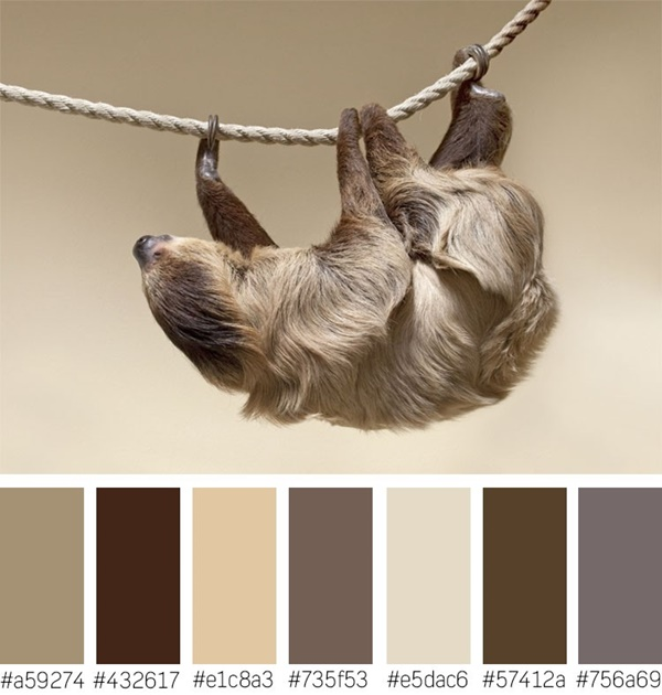 30-receiving-color-palettes-inspired-by-animals-6