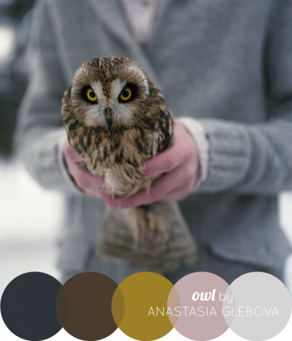 30-receiving-color-palettes-inspired-by-animals-9