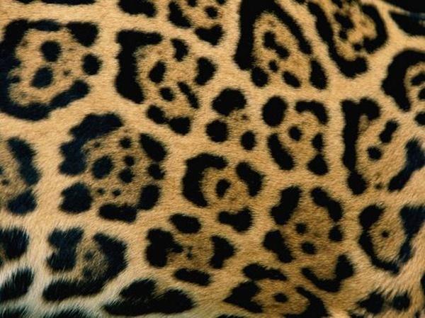 beautiful-illustrations-of-animal-patterns-1