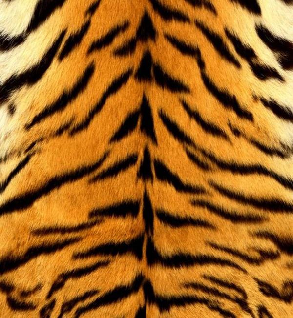 beautiful-illustrations-of-animal-patterns-11