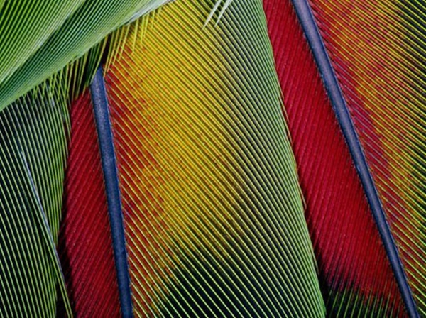 beautiful-illustrations-of-animal-patterns-12