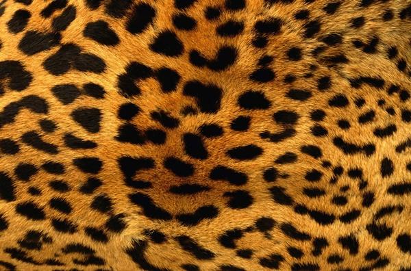 beautiful-illustrations-of-animal-patterns-16