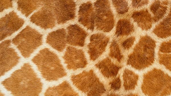 beautiful-illustrations-of-animal-patterns-17
