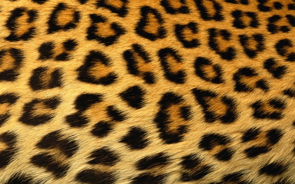 beautiful-illustrations-of-animal-patterns-2