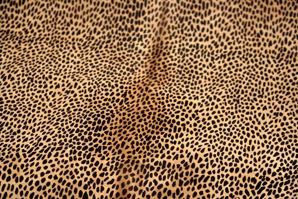 beautiful-illustrations-of-animal-patterns-26