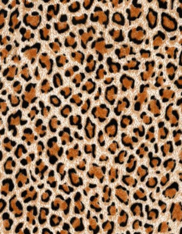 beautiful-illustrations-of-animal-patterns-3